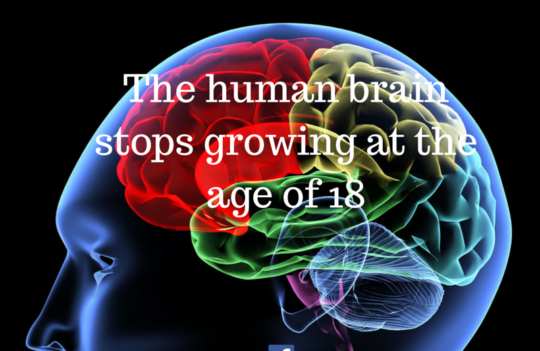 Interesting Fact about your brain!