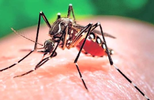 Zika And Dengue – Same Difference?