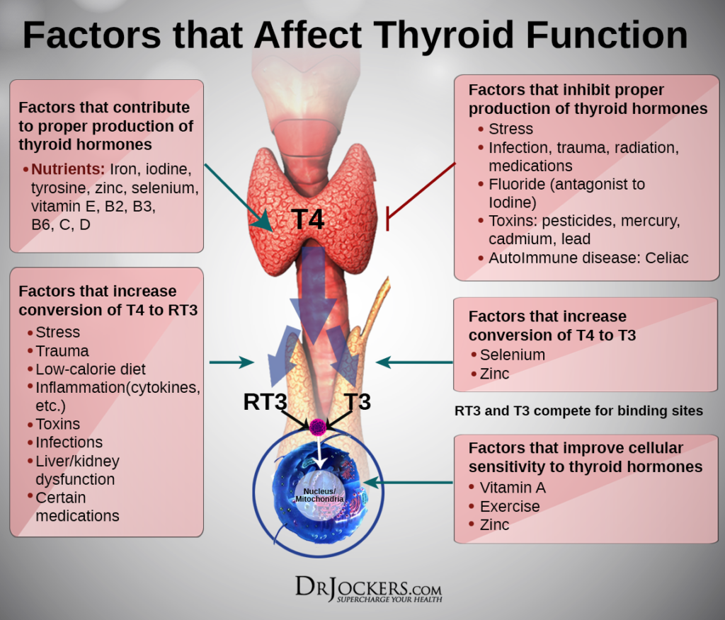 Thyroid Hormone High Low What Does It Mean Getdoc Says